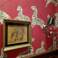 Zebra Wallpaper and Picture Frame